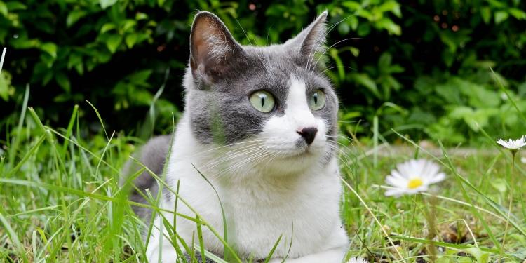 borrelia hos katt