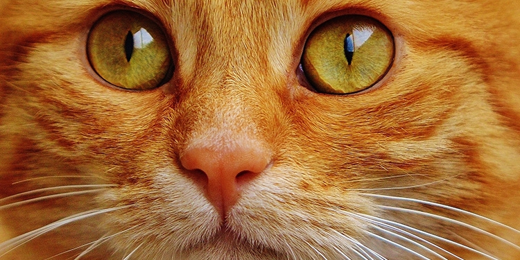 rinner ur kattens öga